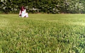 Картинка поле, трава, девушка