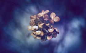 Обои обои, синий, растения, природа, фон, макро