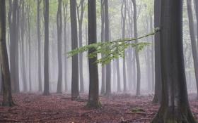 Обои лес, осень, природа