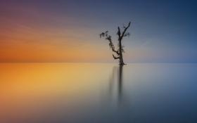 Картинка небо, закат, озеро, отражение, дерево, линия, зеркало