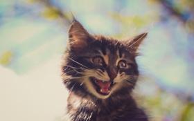 Картинка глаза, малыш, мордочка, котёнок