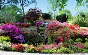 Картинка деревья, цветы, парк, ручей, камни, Великобритания, кусты
