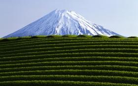 Обои листья, горы, природа, фото, пейзажи, вид, растение