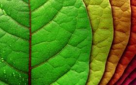 Обои листья, капли, красный, жизнь, зеленый