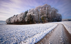 Обои зима, дорога, снег, деревья, пейзаж, красота