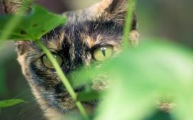 Обои зелень, кошка, кот, взгляд