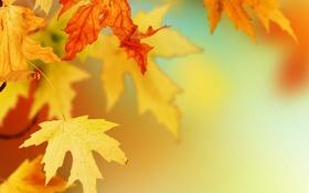 Обои листья, макро, фото, обои