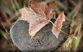Обои иней, осень, природа, лист, пень, сухой