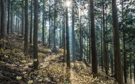 Картинка зелень, лес, солнце, лучи, деревья, природа