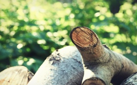 Обои дерево, пень, пни, древесина, полено, пенёк