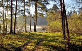 Картинка лес, пейзаж, лето
