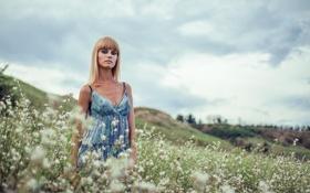 Картинка поле, взгляд, девушка, пейзаж, цветы, холмы, photographer