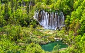 Обои лес, водопады, Plitvice, Хорватия, озеро