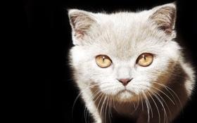 Картинка глаза, кот, усы, морда, свет, тень, шерсть