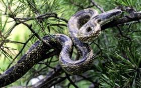 Обои листья, дерево, змея