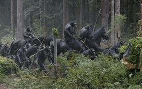 Обои лошадь, обезьяна, Планета обезьян: Революция, Dawn of the Planet of the Apes