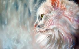 Картинка кошка, взгляд, дождь, окно, мордочка, профиль, белая