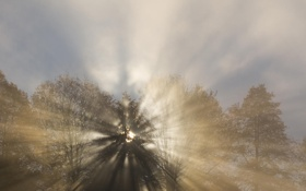 Картинка лес, солнце, лучи, свет, деревья, туман