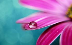 Картинка цветок, макро, цветы, фото, растение, капля, лепестки