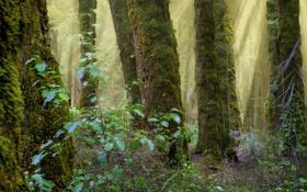 Картинка лес, природа, стволы, мох