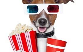 Обои напиток, 3d очки, попкорн, очки, собака