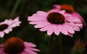 Обои макро, цветы, фото, лепестки, красивые обои