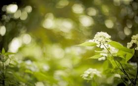 Обои макро, природа, растения