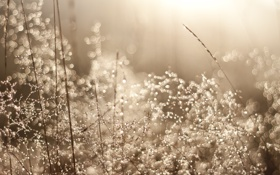 Обои трава, роса