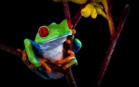 Картинка контраст, цвет, лягушка, тёмный фон