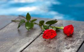 Картинка вода, цветы, мост, доски, розы