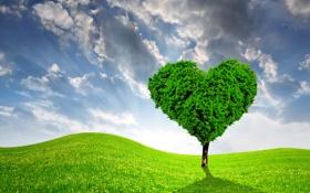 Картинка поле, дерево, сердце, весна, луг, love, sunshine