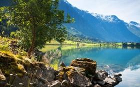 Обои пейзаж, небо, озеро, дерево, берег, горы, гладь