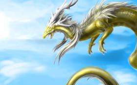 Обои небо, взгляд, полет, фантастика, дракон, пасть, рога