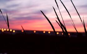 Картинка небо, огни, Закат, колоски