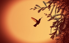 Обои свет, природа, фон, птица