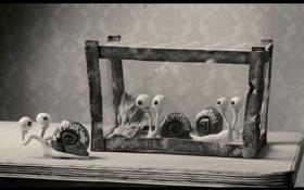Обои мультфильм, мэри и макс, улитки, пластилиновый, в аквариуме