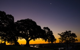 Обои деревья, сумерки, парк, Australiaвечер, Observatory Hill in Sydney