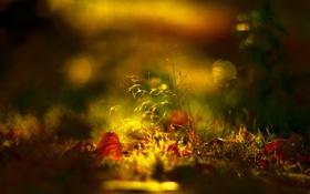 Обои осень, листва, фокус