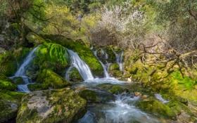 Картинка лес, ручей, камни, водопад, мох, кусты
