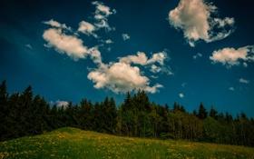 Обои лес, небо, трава, облака, деревья, цветы