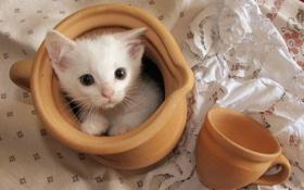 Картинка кошка, фон, чашка