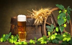 Картинка пиво, колесо, колосья, бочка, пенка, хмель