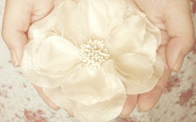 Обои белый, цветок, украшение