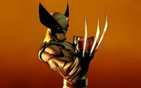 Обои злость, Росомаха, Логан, люди икс, Wolverine, Marvel, x-men