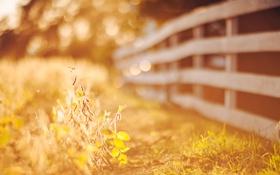 Картинка осень, трава, листья, солнце, макро, свет, природа