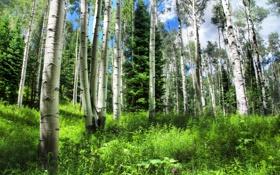 Обои лес, зелень, трава, деревья, лето