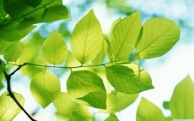 Картинка природа, листва, весна