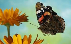 Обои цветок, полет, бабочка, разноцветные
