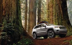 Обои лес, деревья, джип, внедорожник, jeep, grand cherokee