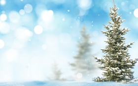 Картинка снег, ёлка, боке